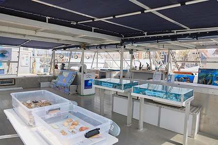 Demi-journee catamaran Cap Agde