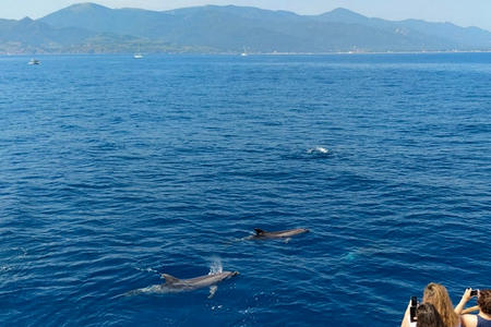 Excursion dauphins Leucate