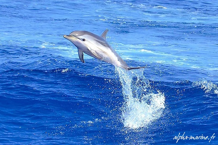 rencontre avec les dauphins antibes