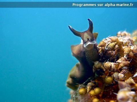 Connu Baptême plongée sous-marine Frontignan Hérault 34. Bapteme plongee  ZN86