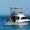 Pêche au gros aux Stes Maries de la Mer